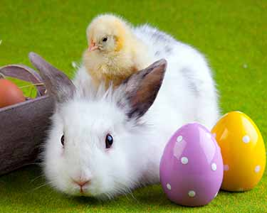 Kids St. Louis: Easter Bunny Events - Fun 4 STL Kids
