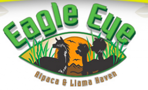 Eagle Eye Alpaca And Llama Haven Traveling Petting Zoo