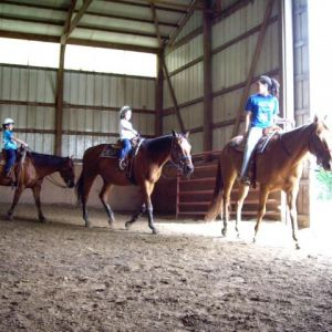 Ace Stables Scout Programs