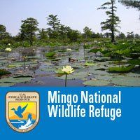 Mingo National Wildlife Refuge